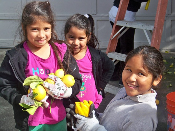 Community food bank recipients helped out with the harvest.