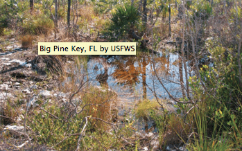 US Fish And Wildlife Service Announces Completion Of National - Us fish and wildlife service national wetlands inventory map