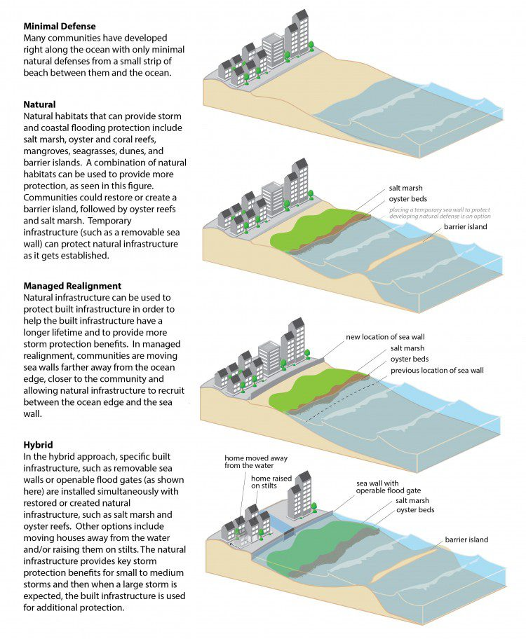 Natural and manmade approaches to coastal resilience take many forms.