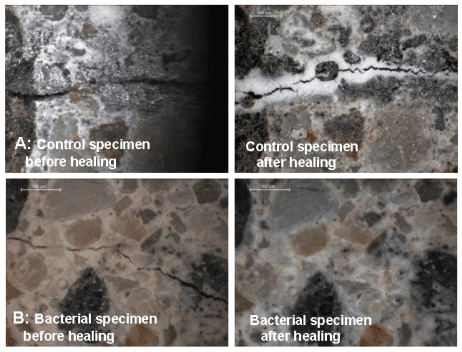 Bacterial_Concrete