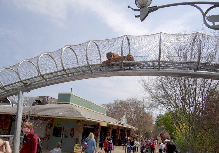 Big Cat Crossing, Philadelphia Zoo,Philadelphia, Pa.