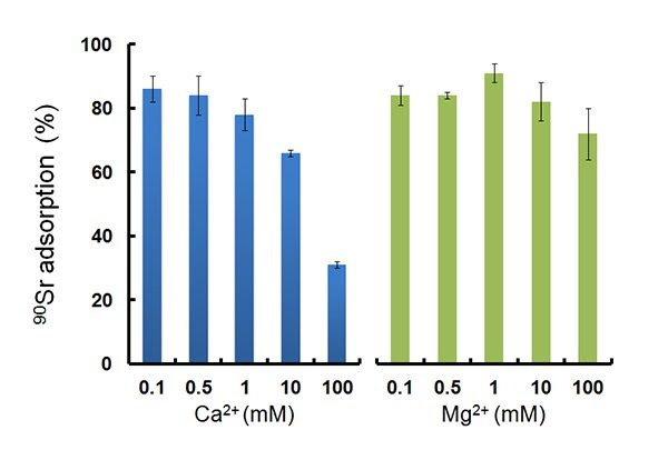Fig. 2 Effect of competing Ca2+ and Mg2+ ions on 90Sr adsorption onto HAP.