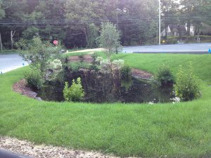 Figure 3. Another ineffective rain garden was installed above previously filled wetland soil.