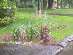 Figure 6. A homeowner built a successful bioretention system after properly analyzing the local soil.